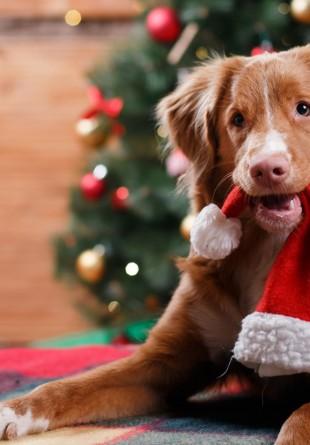 Fă-i o bucurie și adu-i acasă cel mai bun prieten!